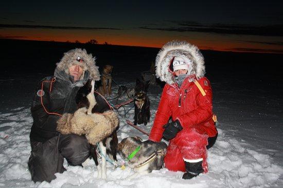 Финнмарк, Норвегия: Activités chiens de traîneau avec séjours + Raid a la demi ou journée ou sur plusieurs jours.
