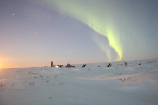 Aurores Boréales et chiens de traîneau, Nesseby Finnmark.