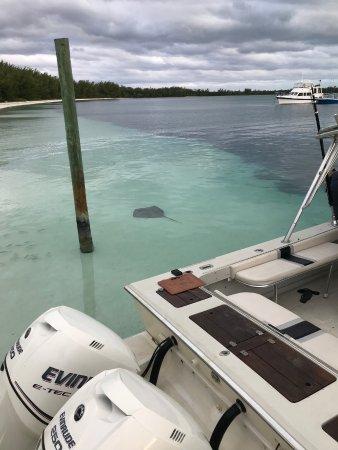 Green Turtle Cay: Einmaliges Erlebnis mit Rochen