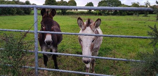 Coolbawn, Ireland: 20170903_200611_large.jpg