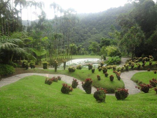 Picture of jardin de balata fort de france for Jardin en france