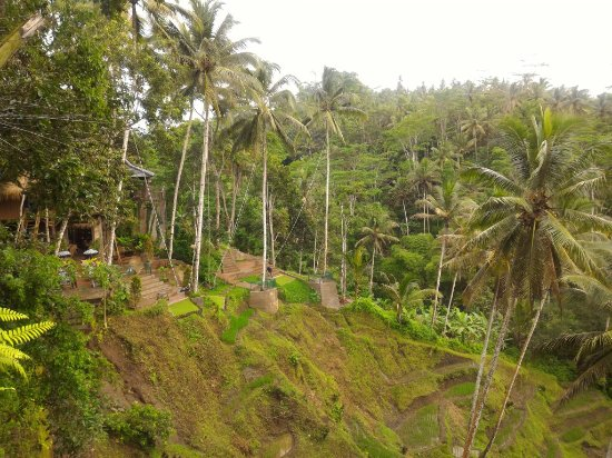 Mas, Indonesien: Swing in bali and coffee plantation