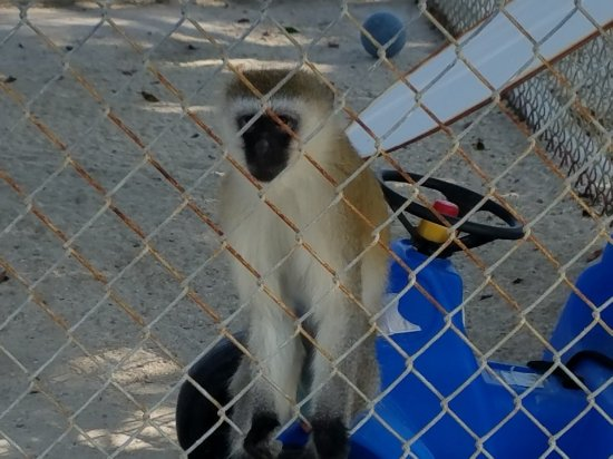 Octagon Wildlife Sanctuary And Rehabilitation Center : 20171230_130045_large.jpg
