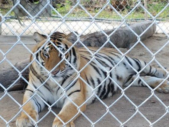 Octagon Wildlife Sanctuary And Rehabilitation Center : 20171230_123403_large.jpg