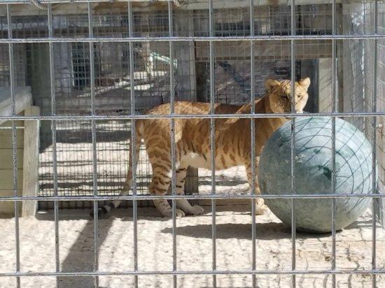 Octagon Wildlife Sanctuary And Rehabilitation Center : 20171230_123738_large.jpg