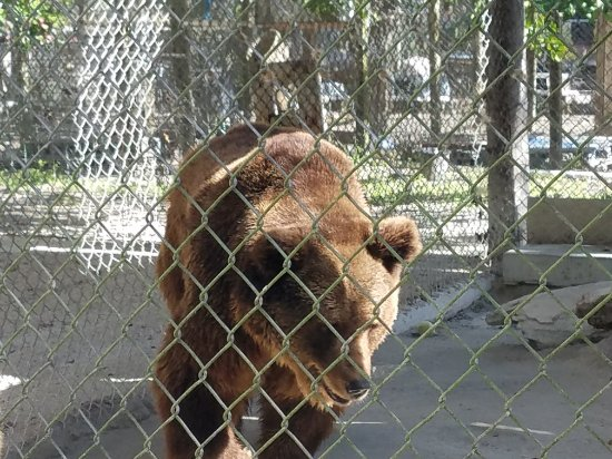 Octagon Wildlife Sanctuary And Rehabilitation Center : 20171230_115626_large.jpg