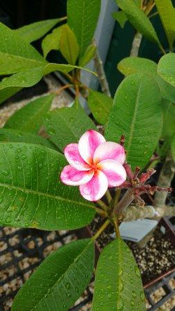 Edison & Ford Winter Estates: Garden flower, one of so many