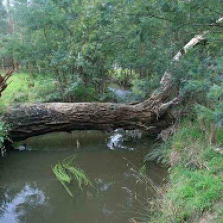 Lilydale, Australia: Hull Road Wetlands