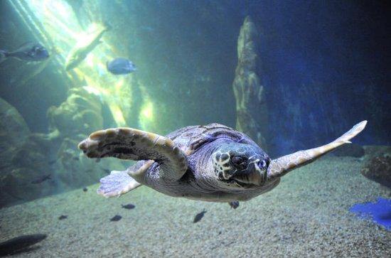 Cala Gonone Aquarium Toegangsbewijs