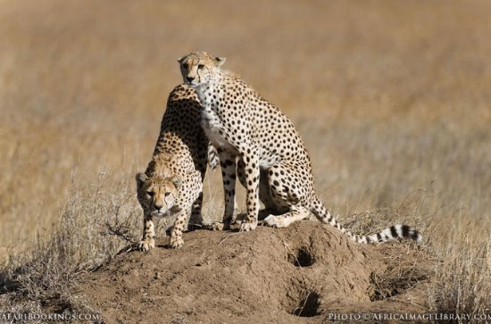 12 DAYS BEST OF KENYA AND TANZANIA...