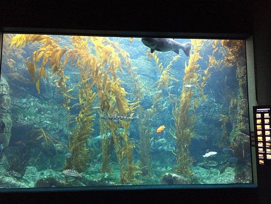 Birch Aquarium at Scripps: photo0.jpg