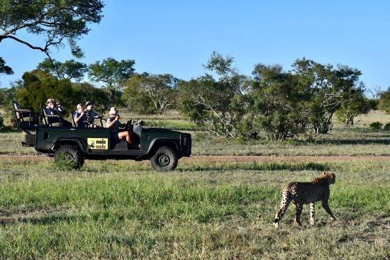 Mala Mala Private Game Reserve, Güney Afrika: photo6.jpg