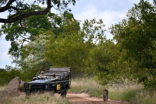 Mala Mala Private Game Reserve, Güney Afrika: photo7.jpg