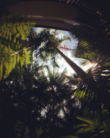 Coconut Grove Apartments: Through the palms of Coconut Grove