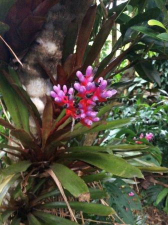 Lyon Arboretum : 花 1