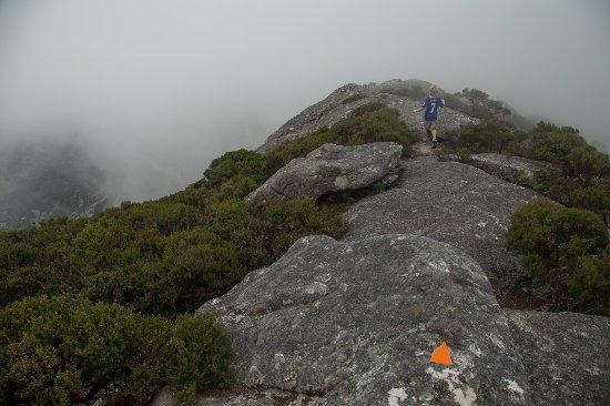 Flinders Island, Australia: Track to Mt Strzelecki summit