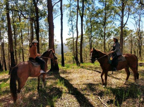 Beechwood, أستراليا: IMG_20180120_095438431_HDR_large.jpg