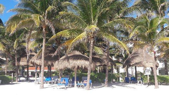 Hotel Akumal Caribe: 20180105_100213_large.jpg