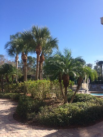 Holiday Inn Orlando SW - Celebration Area: Behind the spa is top spot for sunbathing