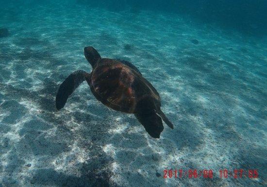 Puerto Villamil, Ισημερινός: Snorkeling e Tartarughe