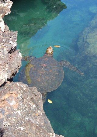 Puerto Villamil, Ecuador: tartaruga