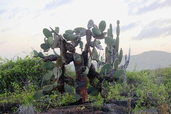 Puerto Villamil, Ecuador: Cactus