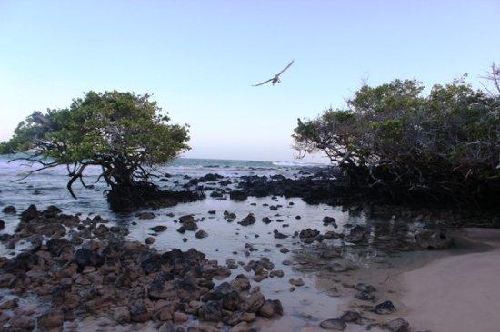 Puerto Villamil, Ecuador: Spiaggia