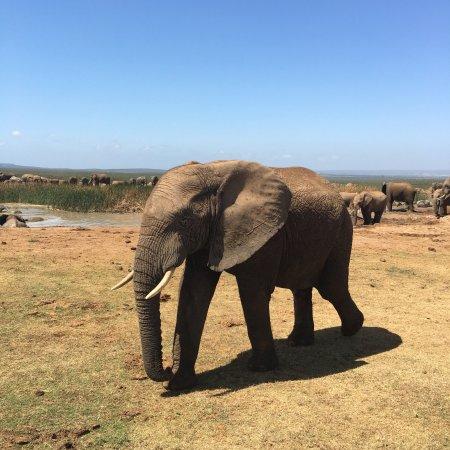 Addo Elephant National Park, Sydafrika: photo0.jpg