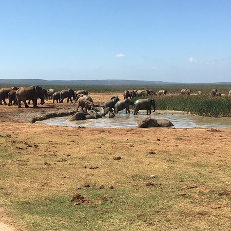 Addo Elephant National Park, Sydafrika: photo1.jpg