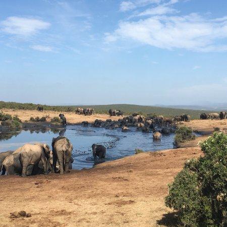 Addo Elephant National Park, Sydafrika: photo2.jpg