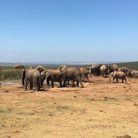 Addo Elephant National Park, Sydafrika: photo3.jpg