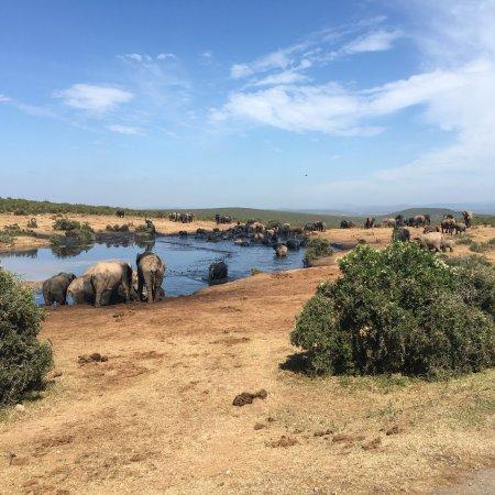 Addo Elephant National Park, Sydafrika: photo4.jpg