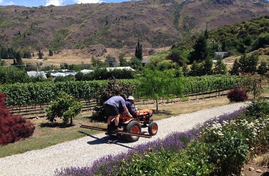 Clyde Village Vineyard: Men at work