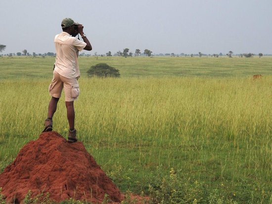 Birdwatching in Kidepo valley National Park
