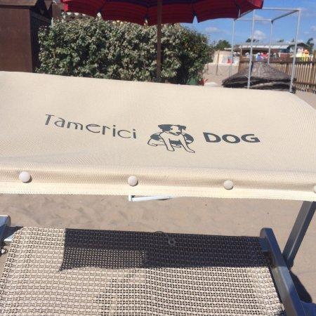 Bagno Tamerici Dog: photo0.jpg