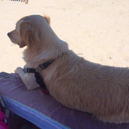 Bagno Tamerici Dog: photo1.jpg