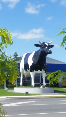 ‪Morrinsville Mega Cow‬