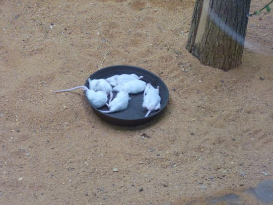 Zoo Plzeň: Η τροφή των φιδιών