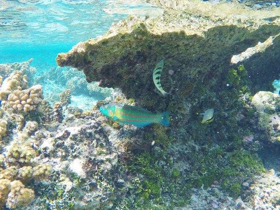 Patio, Polinesia Francesa: Fish in the Coral Garden