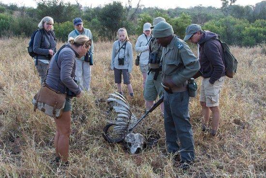 Nationaal Park Kruger, Zuid-Afrika: Buffalo Carcass