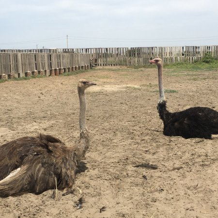 Aves Gigantes de Peru: photo0.jpg