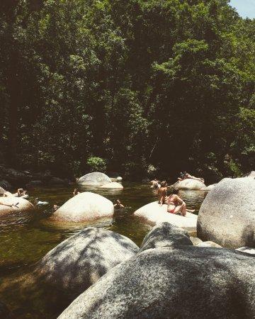 Daintree Region, Australia: A natural beauty!