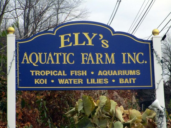 Florham Park, Nueva Jersey: Ely's Aquatic Farm