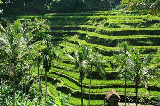 Bali View Tour