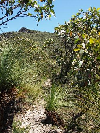 Dunkeld, Australia: path - 80% of the way up