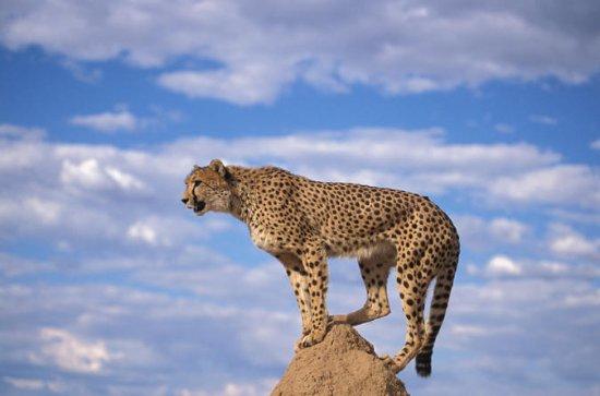 Cheetah, pinguïnkolonie, wijnreis via ...