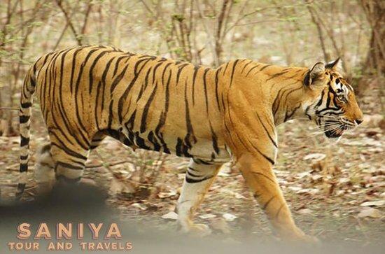 Rajasthan Wildlife Safari Tour med ...