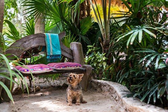 Holbox Hotel Mawimbi: pet friendly