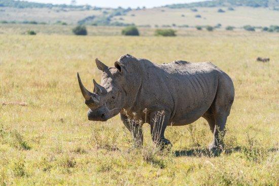 HillsNek Safaris, Amakhala Game Reserve : Game Drive
