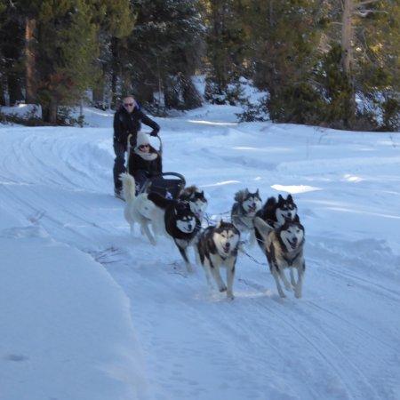 Best Dog Sledding Tours In Colorado